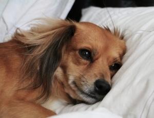 Outdoor Hundebett- Auch Hunde haben Schmerzen