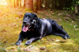 Outdoor Hundebett: Stopp dem Hecheln